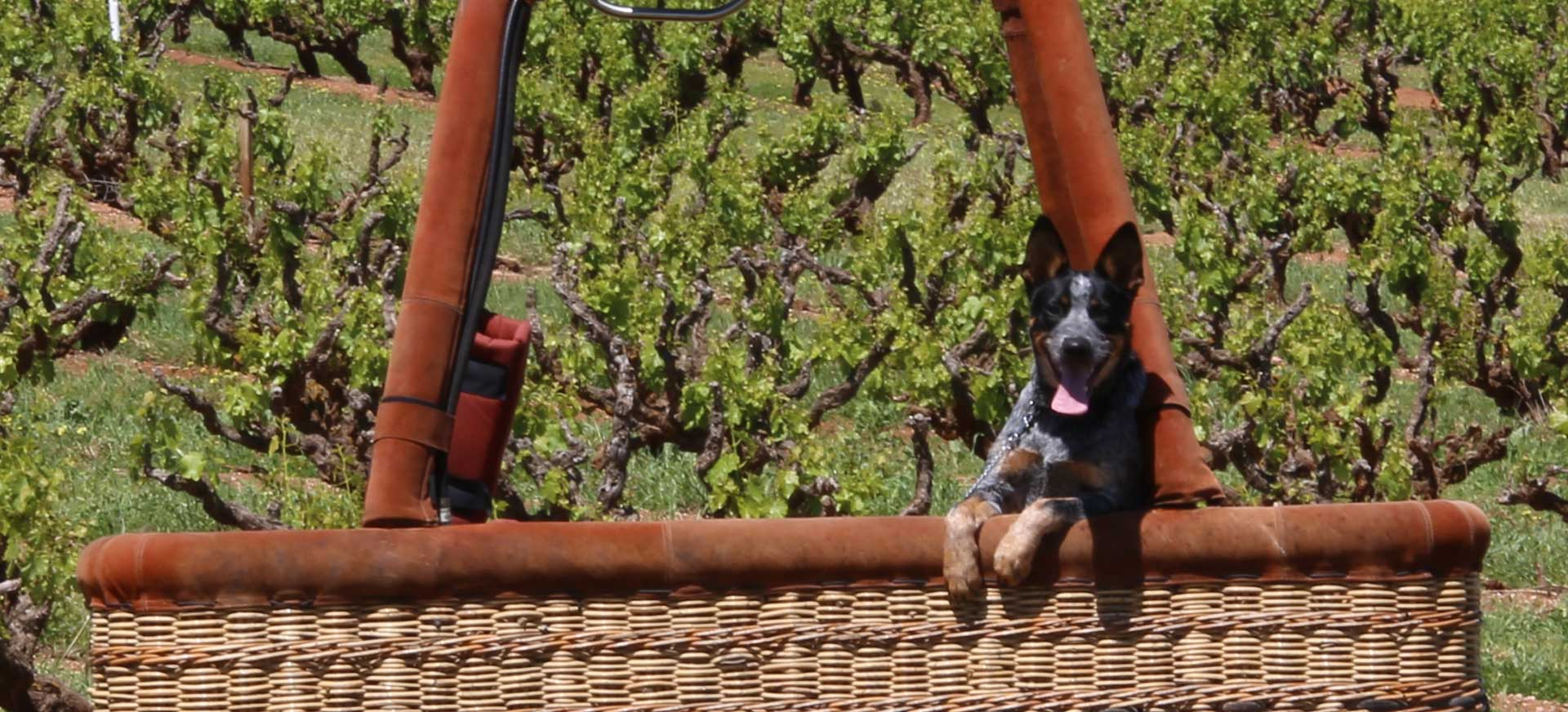 balloon-adventures-hot-air-balloon-flights-chief-pilot-and-dog-gibson-and-family7